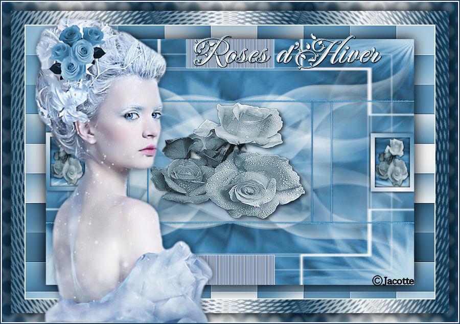 roses-d-hiver-1.jpg